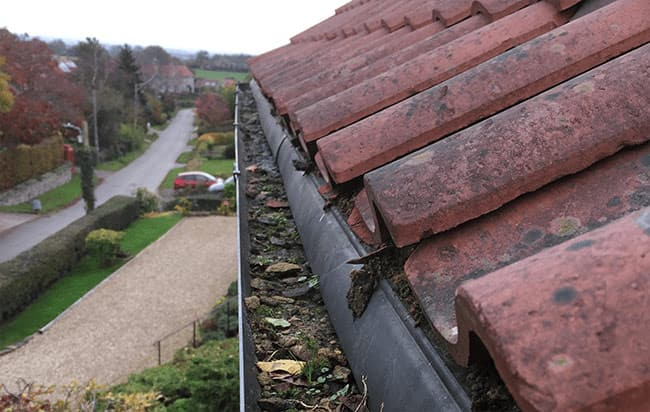 Gutter Cleaning in Hastingwood
