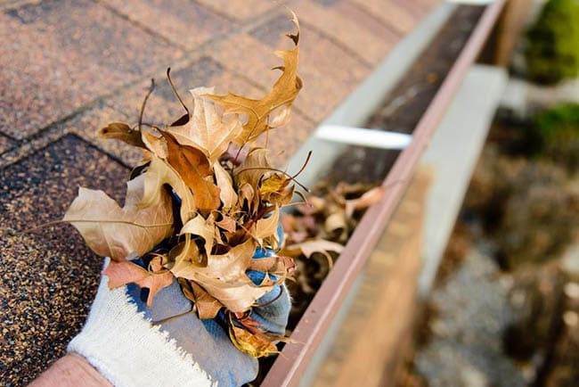 Gutter Cleaning in Rayne